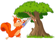 Funny squirrel saws branch Stock Photos