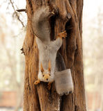 Funny squirrel on the tree Stock Photo