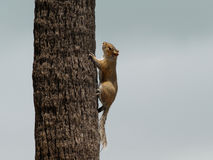 A Funny Squirrel in Tree Stock Image