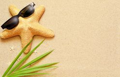 Funny starfish on the summer beach with sand. And palm Stock Images