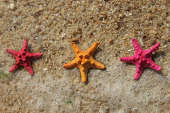 Funny starfishes Royalty Free Stock Photo