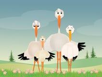 Funny storks family. Funny illustration of family of storks Stock Image