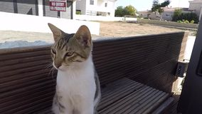 Funny stretching striped kitten in Ayia Napa Cyprus stock footage