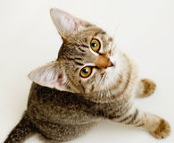 Funny striped kitten. Funny gray striped kitten with a curious look Royalty Free Stock Image