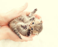 Funny striped kitten Stock Images