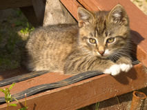 Funny striped kitten Royalty Free Stock Image