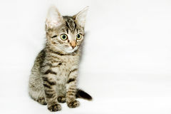 Funny striped kitten looks up,  Stock Image