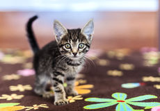 Funny striped kitten sitting on a bed Stock Photo