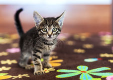 Funny striped kitten sitting on a bed Stock Images