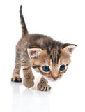 Funny striped kitten Stock Image