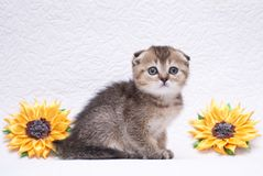 Funny striped little kitten is playin royalty free stock photos