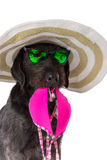 Funny summer black dog with summer accessories. Royalty Free Stock Image