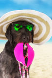 Funny summer black dog with summer accessories. Royalty Free Stock Images