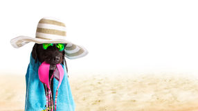 Funny summer black dog with summer accessories. Royalty Free Stock Photos