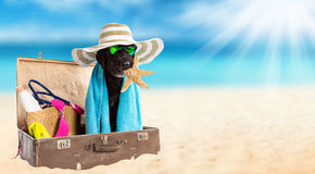 Funny summer black dog with summer accessories. Stock Image