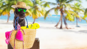 Funny summer black dog with summer accessories. Mutt black dog with beach accessories. Funny summer concept Royalty Free Stock Image