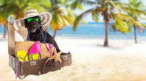 Funny summer black dog with summer accessories. Mutt black dog with beach accessories. Funny summer concept Royalty Free Stock Photos