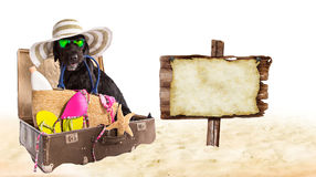 Funny summer black dog with summer accessories. Mutt black dog with beach accessories. Funny summer concept Stock Photos