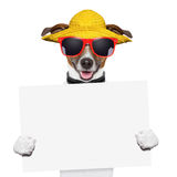Summer dog banner. Funny summer dog holding a blank banner Stock Photo
