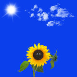 Funny sunflower. With eyes and a sunny sky in background Stock Image