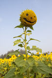 Funny sunflower Stock Images