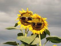 Funny sunflower family. Royalty Free Stock Photo