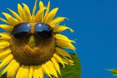 Funny sunflower Stock Photo