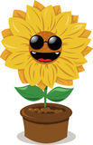 Funny sunflower wearing sunglasses Stock Photo