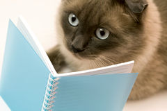 Funny surprised cat reading blank notebook. Portrait of funny cat amazed by what she`s reading Royalty Free Stock Image