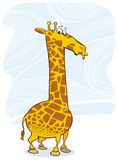 Funny surprised giraffe Royalty Free Stock Image