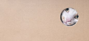 Funny tabby cat looking curious out of a hole in a cardboard box. Panoramic image with copy space stock photos