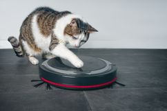 Funny tabby cat playing with a robot vacuum cleaner. stock photos