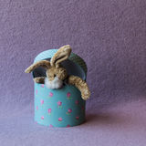 Funny teddy bunny get out from gift box. Royalty Free Stock Photos
