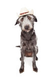 Funny Terrier Dog Wearing Cowboy Hat Royalty Free Stock Photos