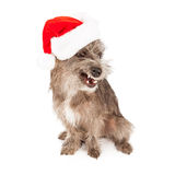 Funny Terrier Dog Wearing Santa Hat Royalty Free Stock Photo