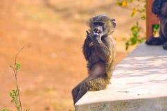 Funny thoughtful monkey Royalty Free Stock Photos