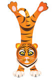 Funny tiger Stock Photo