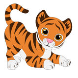 Funny tiger on white background Stock Photos