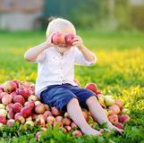 Funny toddler boy sitting on heap of apples and eating ripe apple in domestic garden stock image