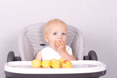 Funny toddler eating an apricot in baby chair against the grey background.  Royalty Free Stock Photos