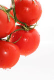 Funny tomatoes. Four tomatoes on a branch, the white background Royalty Free Stock Images