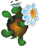 Funny tortoise Royalty Free Stock Image