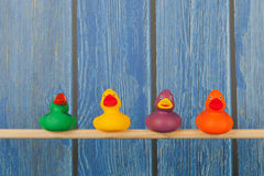 Funny toy ducks Stock Photography
