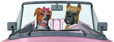 Funny Travel Dog, Vacation, Isolated. Fun and funny man and woman dog couple illustration are driving a pink convertible car on vacation or holiday. Isolated on royalty free illustration