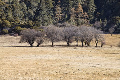 Funny trees. Some trees front the forests in POTATSO national park Royalty Free Stock Image