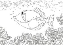 Triggerfish on a reef. A funny trigger fish swimming over amazing corals in a tropical sea, a black and white vector illustration in cartoon style for a coloring Stock Image