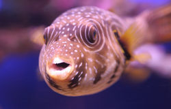 Funny tropical fish 2. The tropical fish from the Red sea Stock Photo
