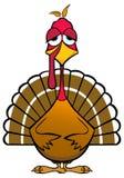 Funny Turkey Stock Photography