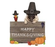 Funny turkey and pug dog wearing pilgrim hat for Thanksgiving day and wooden sign with text happy thanksgiving
