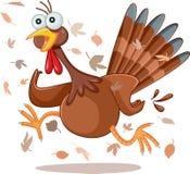Funny Turkey Running Vector Cartoon. Illustration of a desperate Thanksgiving bird in panic Stock Image